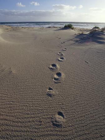 jason-edwards-human-foot-prints-cross-a-sand-dune-on-a-remote-beach