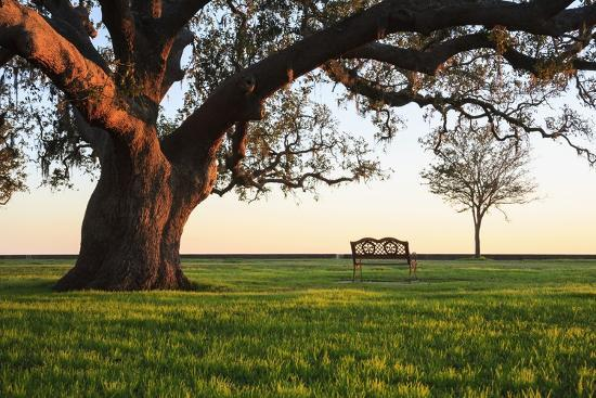 jason-langley-a-grand-oak-tree-overhangs-a-lone-bench-at-sunset