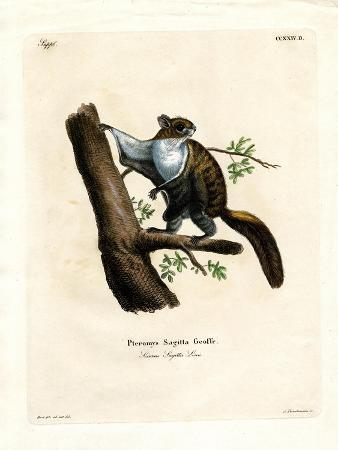 javan-flying-squirrel