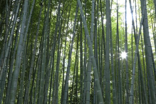 jaynes-gallery-japan-kyoto-sunburst-inside-the-arashiyama-bamboo-grove