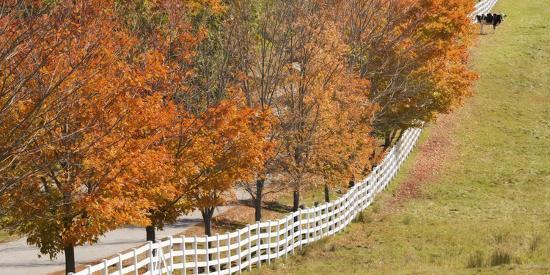 jaynes-gallery-maine-pownal-fenceline-and-cow