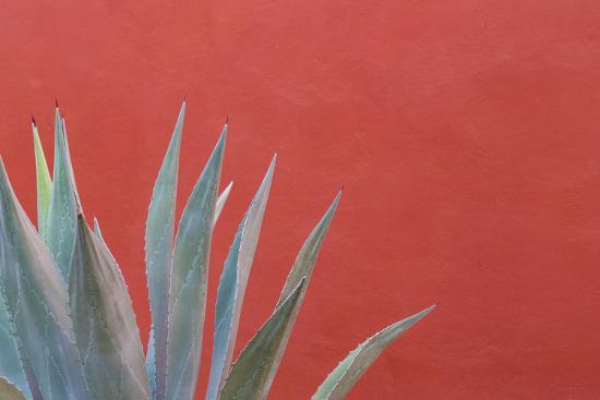 jaynes-gallery-mexico-san-miguel-de-allende-agave-plant-next-to-colorful-wall