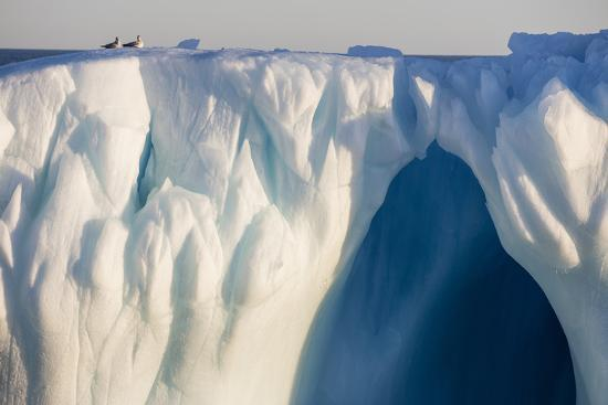 jaynes-gallery-norway-svalbard-spitsbergen-northern-fulmars-rest-atop-glacier