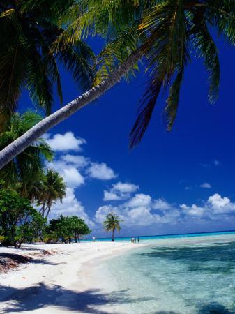 jean-bernard-carillet-palm-tree-on-beach-french-polynesia