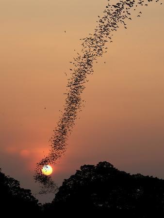 jean-de-bat-swarm-at-sunset