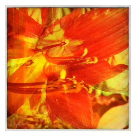 jean-francois-dupuis-floral-encounter-i