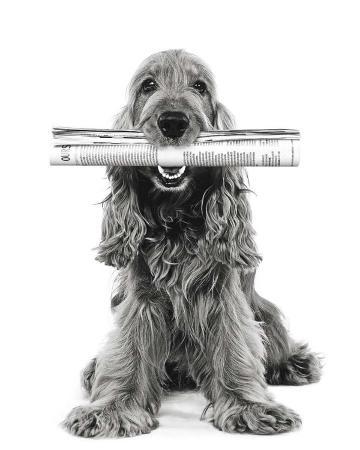 jean-michel-labat-dog-news