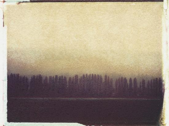 jennifer-kennard-skagit-valley-poplars-no-2