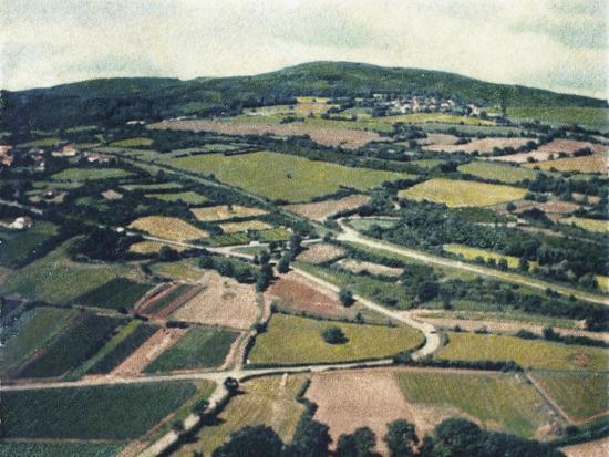 jennifer-kennard-vineyards