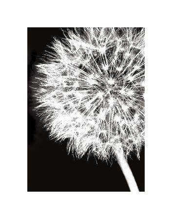 jenny-kraft-dandelion-crop