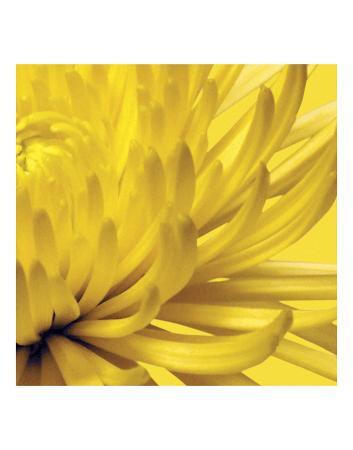 jenny-kraft-yellow-mum-2