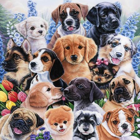 jenny-newland-puppy-collage