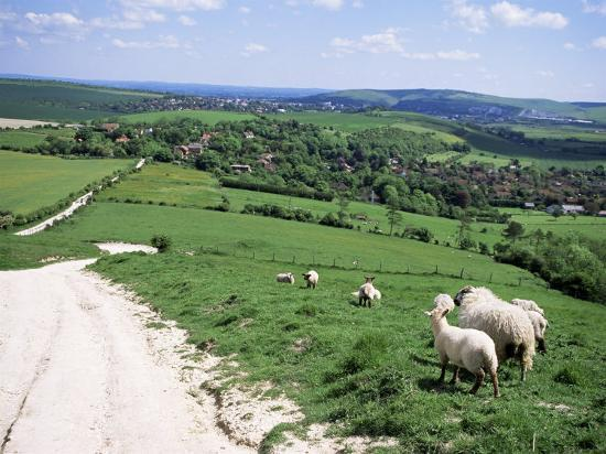 jenny-pate-sheep-on-the-south-downs-near-lewes-east-sussex-england-united-kingdom