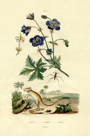 jerboa-1833-39