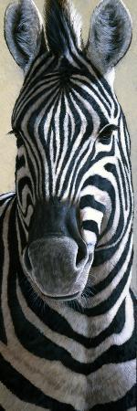 jeremy-paul-zebra
