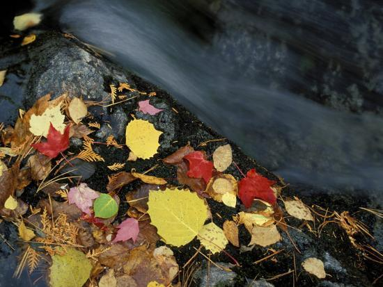 jerry-marcy-monkman-stream-in-fall-maine-usa
