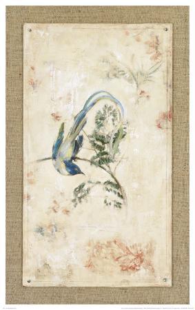 jillian-david-asian-paradise-flycatcher