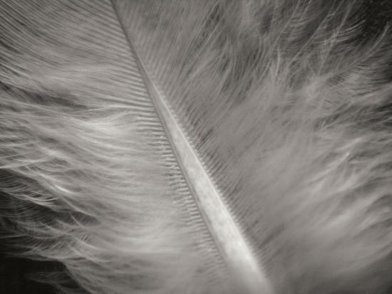 jim-christensen-feather-ii