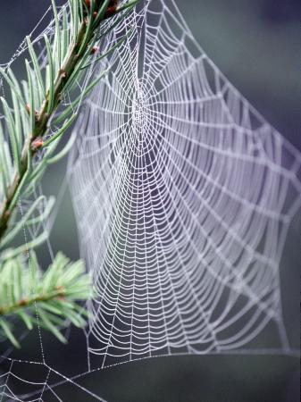 jim-corwin-spider-webs-and-dew-drops