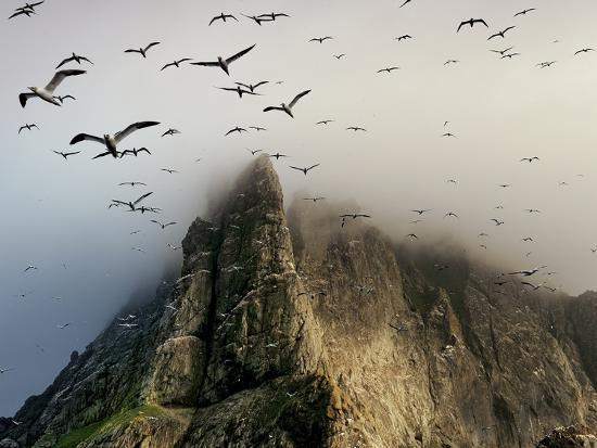jim-richardson-cloud-covers-a-sea-bird-rookery-high-on-a-sea-stack-cliff