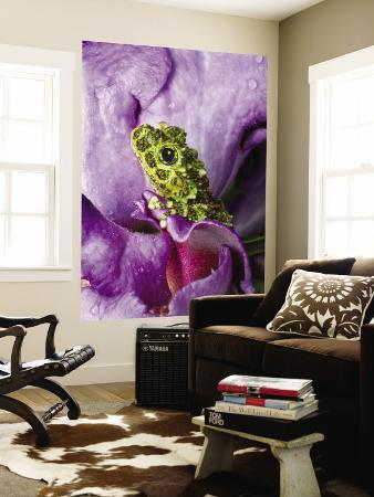 jim-zuckerman-close-up-of-mossy-tree-frog-on-flower-vietnam