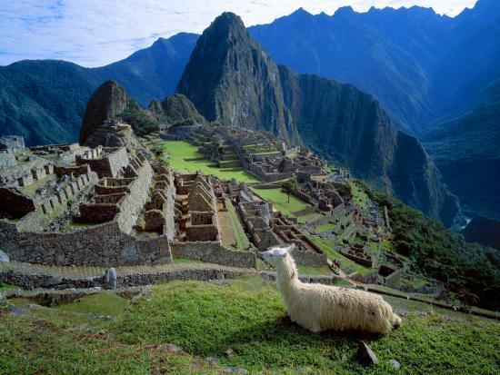 jim-zuckerman-llama-rests-overlooking-ruins-of-machu-picchu-in-the-andes-mountains-peru