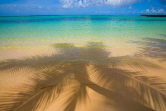 jim-zuckerman-palm-shadow-paradise