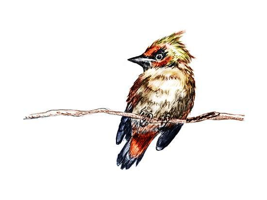 jim80-hand-draw-bird