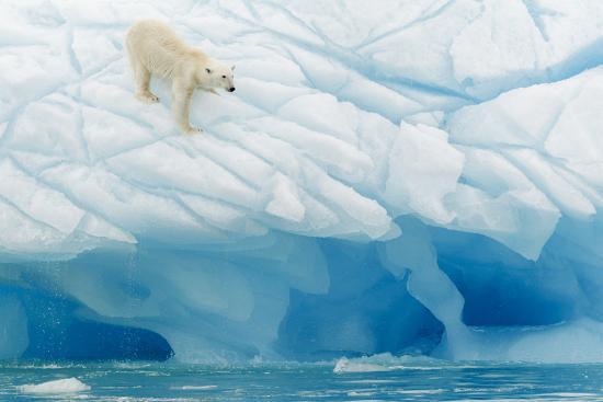 joan-gil-raga-polar-bear