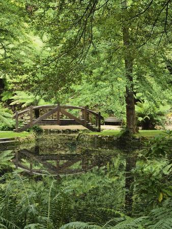 jochen-schlenker-alfred-nicholas-gardens-dandenong-ranges-national-park-dandenong-ranges-victoria-australia