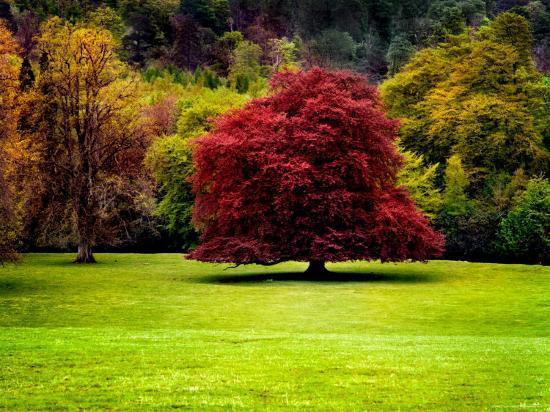 jody-miller-the-red-tree