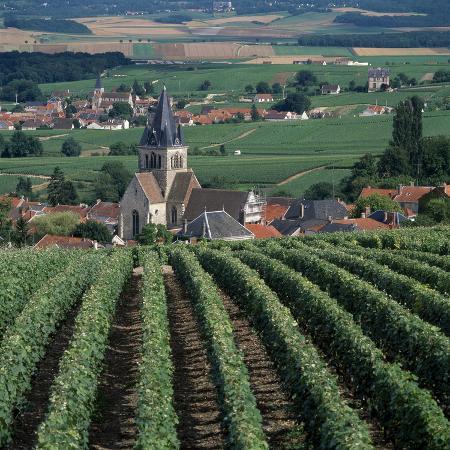 joe-cornish-vineyards-of-ville-domange-north-side-of-montagne-de-reims