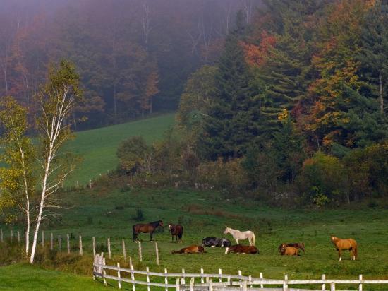 joe-restuccia-iii-horses-in-field-near-grandville-vermont-usa