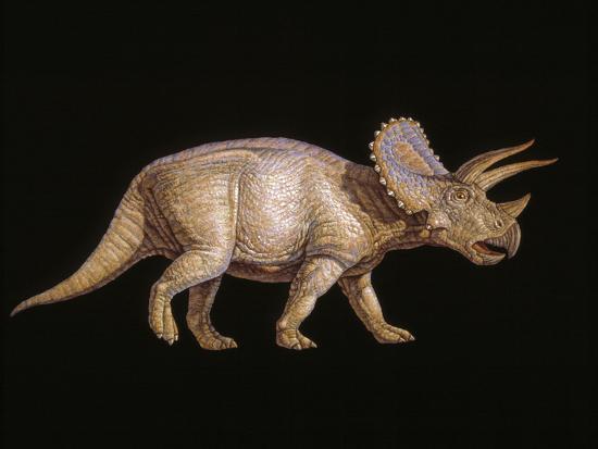 joe-tucciarone-triceratops-dinosaur