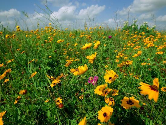 joel-sartore-a-field-of-wildflowers