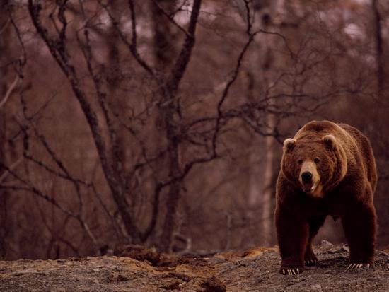 joel-sartore-a-grizzly-bear