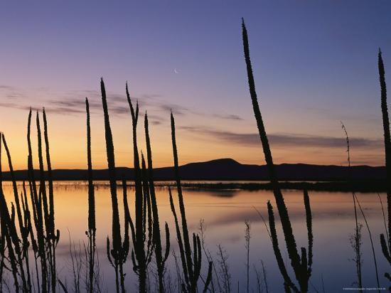 joel-sartore-a-new-moon-and-silhouetted-weeds-along-the-water-at-twilight