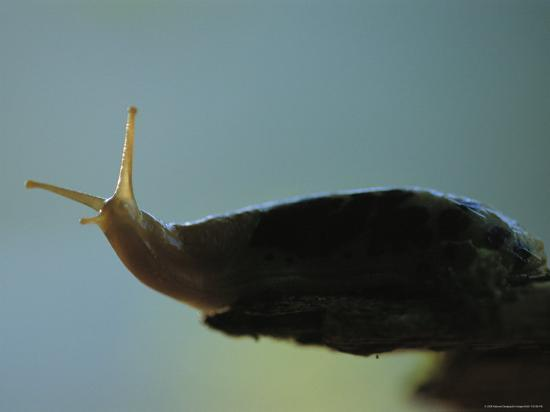 joel-sartore-close-view-of-a-banana-slug