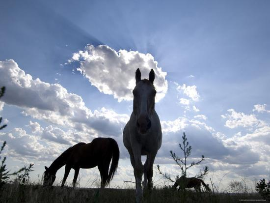 joel-sartore-the-sun-shines-through-clouds-on-some-horses-in-burwell-nebraska