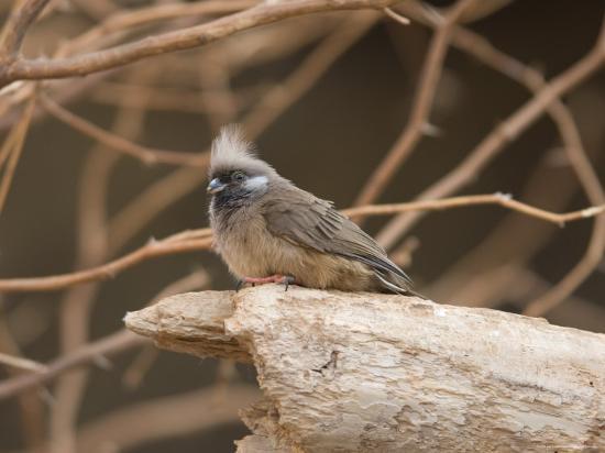 joel-sartore-towhee-at-the-omaha-zoo-nebraska