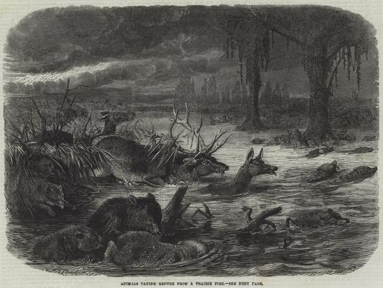 johann-baptist-zwecker-animals-taking-refuge-from-a-prairie-fire