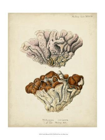 johann-esper-coral-collection-ii