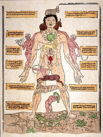 johannes-de-ketham-bloodletting-chart-1493
