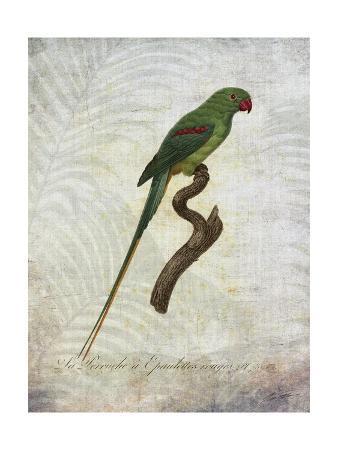 john-butler-parrot-jungle-iii