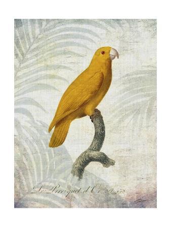 john-butler-parrot-jungle-v