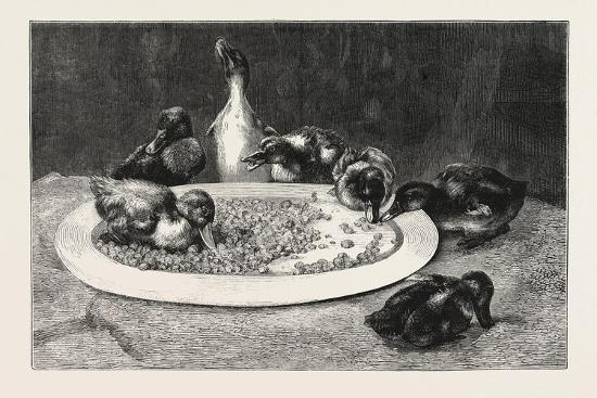 john-charles-dollman-ducks-and-green-peas-1876-picture
