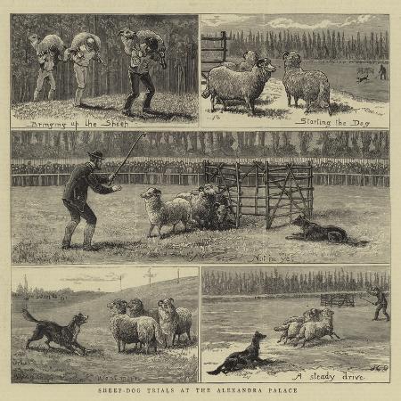 john-charles-dollman-sheep-dog-trials-at-the-alexandra-palace
