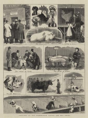 john-charles-dollman-sketches-at-the-birmingham-cattle-and-dog-shows