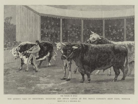 john-charles-dollman-the-queen-s-sale-of-shorthorn-hereford-and-devon-cattle-at-the-prince-consort-s-shaw-farm-windsor