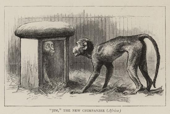 john-charles-dollman-wanderings-in-the-zoo